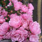Last Of The Summer Pink by Vanessa  Warren
