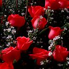 red roses for a blue lady by lensbaby