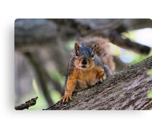 I smell Peanuts in your pocket! Canvas Print