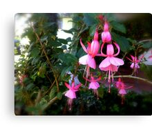 Acrobatic flowers! Canvas Print