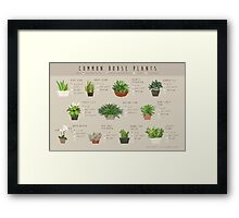 Common House Plants Infographic Framed Print