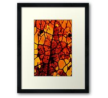 Nature's Stained 'Glass' Windows Framed Print