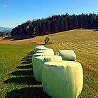 Marshmallows for cows | landscape photography by Patrick Jobst