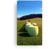 Marshmallows for cows | landscape photography Canvas Print