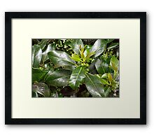 Holly Berries and Leaves Framed Print