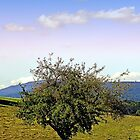 Fresh grass and old apple tree | landscape photography by Patrick Jobst