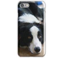 Border Collie iPhone Case/Skin