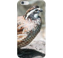 Northern Bobwhite Quail iPhone Case/Skin