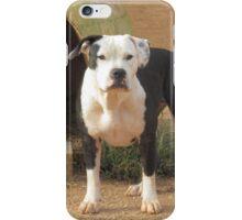 Dottie iPhone Case/Skin