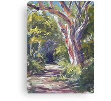 Lake Innes Nature Reserve - paint out Canvas Print