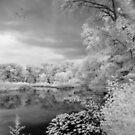 In a Dream  by John Rivera