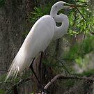 Great Egret by Dennis Cheeseman