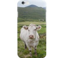 A cow in Kerry iPhone Case/Skin