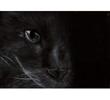 Cat in the Light Photographic Print