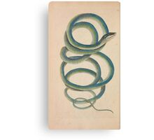 Vintage Natural History Snake Canvas Print