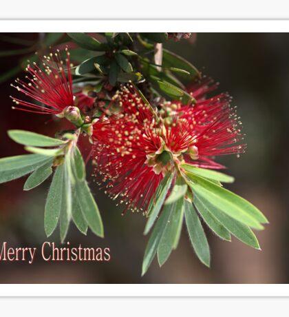 Merry Christmas - Australian Bottlebrush Sticker