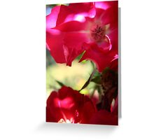 Roses fully opened - 2010 Greeting Card