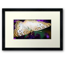 White Peacock Anartia Jatrophae Framed Print
