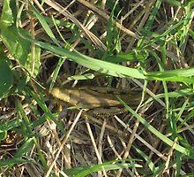 Grasshopper In Cammo by WildestArt