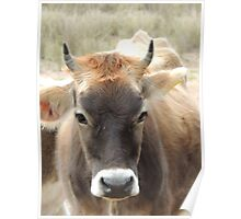 Honey the cow Poster