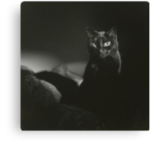 Film noir portrait of black cat Hasselblad square medium format film analogue photograph handmade darkroom print Canvas Print