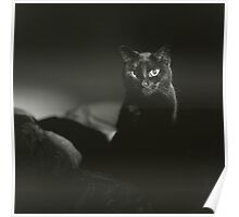 Film noir portrait of black cat Hasselblad square medium format film analogue photograph handmade darkroom print Poster
