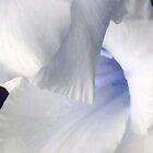 White-Blue by Anivad - Davina Nicholas