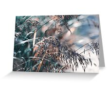 Silver Grass After Rain. Nature in Alien Skin Greeting Card