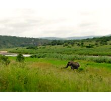 An Elephant's Eden Photographic Print