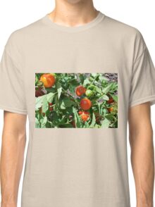 Tomatoes in the garden Classic T-Shirt