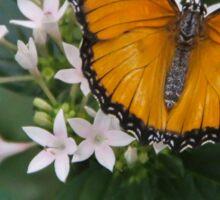 Beautiful African Monarch  Sticker