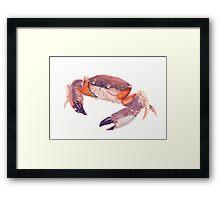 Florida Stone Crab Framed Print