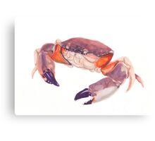 Florida Stone Crab Canvas Print