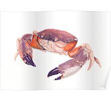 Florida Stone Crab Poster