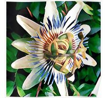 passionfruit blossoms Poster