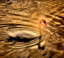 Glowing Swan by LudaNayvelt