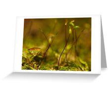 stink bug posing Greeting Card