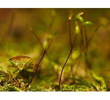 stink bug posing Photographic Print