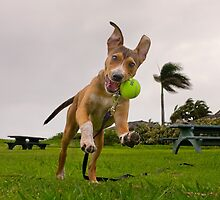I'm having a ball.  by Alex Preiss