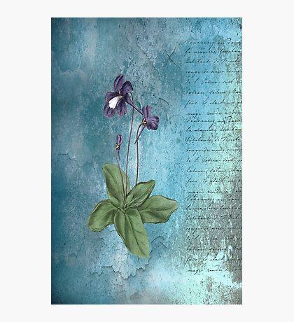 Purple flower on Script Photographic Print