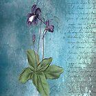 Purple flower on Script by Catherine Hamilton-Veal  ©