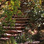 Stairway in the woods of Cascade, Colorado by dfrahm