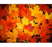 Pile of Colorful Maple Leaves Photographic Print