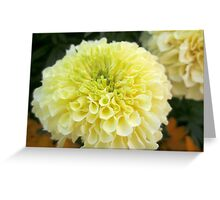 Sweet Cream Furls Greeting Card