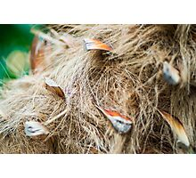 Palm fuzz Photographic Print