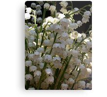 Lily of the Valley ...  Metal Print
