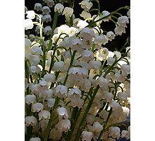 Lily of the Valley ...  Photographic Print
