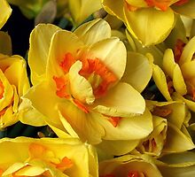 YELLOW and ORANGE ... by OlaG