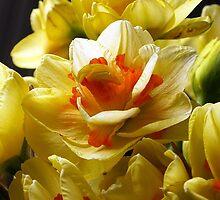 YELLOW TAHITI by OlaG
