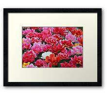 Happy Tulips Framed Print